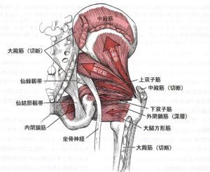股関節後面(深層筋)