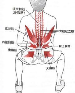 腰部筋活動