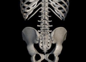 腰椎(骨)