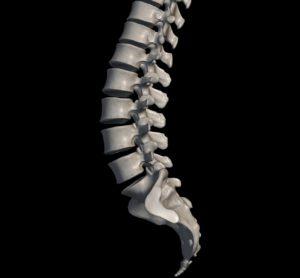 腰椎のみ(骨)