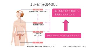 ホルモン分泌の流れ