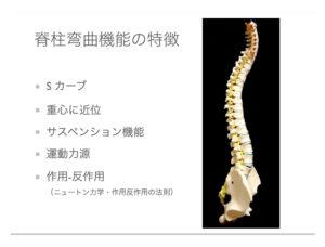 脊柱弯曲機能