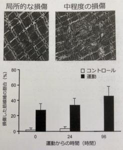 筋原線維の変化
