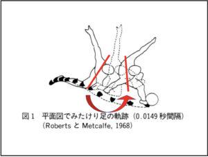 キック動作の骨盤の動き